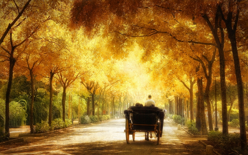 6960955-romantic-carriage-ride