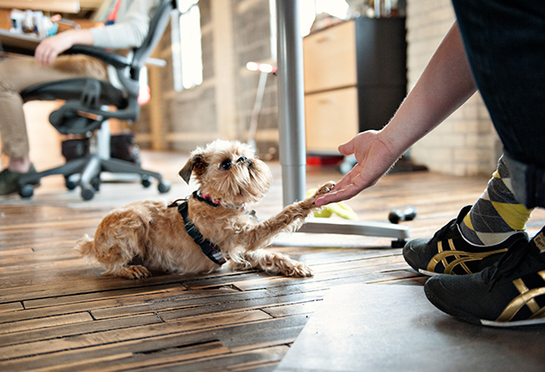 purina-pets_at_work_607x415_001